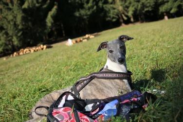 Buddy bewacht den Rucksack